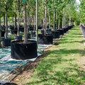 Kiezen voor volwassen bomen