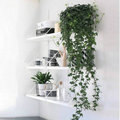 Klimmende en hangende kamerplanten