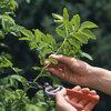 Planten vermeerderen door zelf te stekken