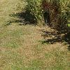 Snel weer een groen gazon