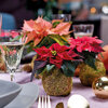 Eenvoudige stylingtips met kerststerren