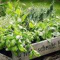 Tips voor het inrichten van je kruidentuin