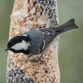 Tips om vogels te voederen in de tuin