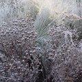 Zijn jouw vaste planten klaar voor de winter?