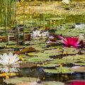 Verhoog de biodiversiteit in jouw vijver