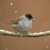 Vogels tellen en observeren bij de voederplaats