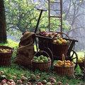 Wanneer is fruit plukrijp?