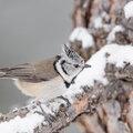 Welke vogels lusten wat?