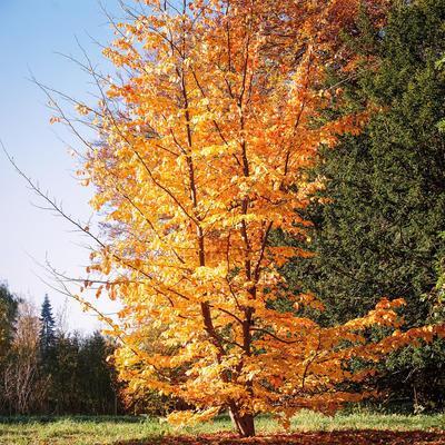 Bijzondere bomen voor kleine tuinen