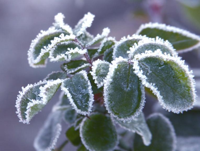 Bevriezen van planten door ligging van tuin