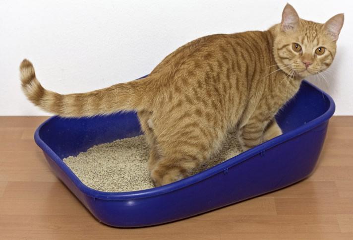 diarree bij katten