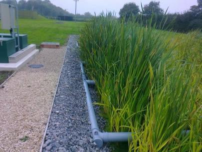 moerasfilter met grassen