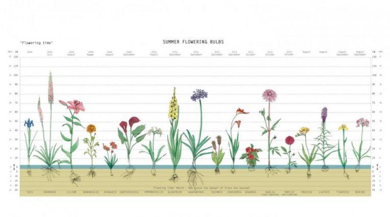 zaaibollenkalender