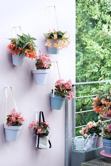 Balkonplant van het Jaar 2017: hangbegonia
