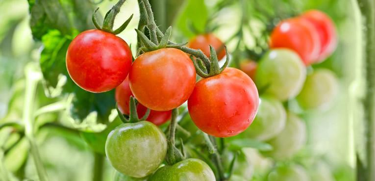 Zelf tomaten kweken en kruiden zaaien