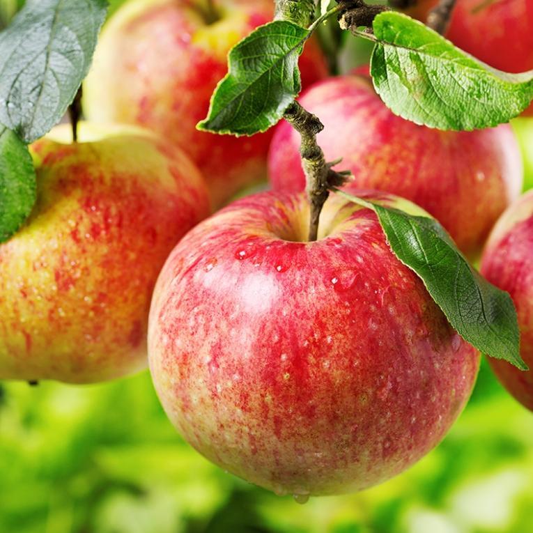 soorten appels - appels eten