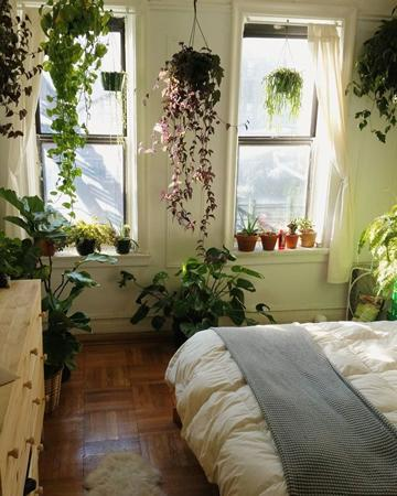 7 plantes pour la chambre coucher des nuits r paratrices et de qualit avec des plantes. Black Bedroom Furniture Sets. Home Design Ideas