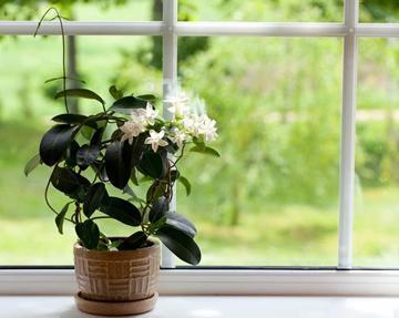 jasmijn in de slaapkamer beter slapen met planten