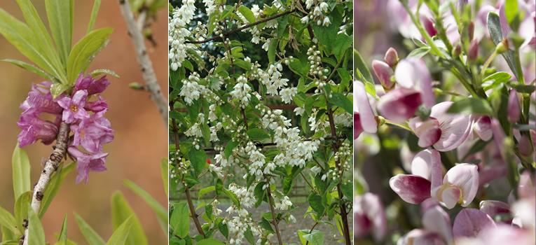 de mooiste struiken voor je tuin bloei voor het hele jaar