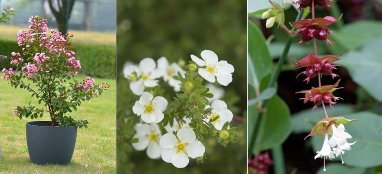 Struiken Met Bloemen Voor In De Tuin.De Mooiste Struiken Voor Je Tuin Bloei Voor Het Hele Jaar Rond