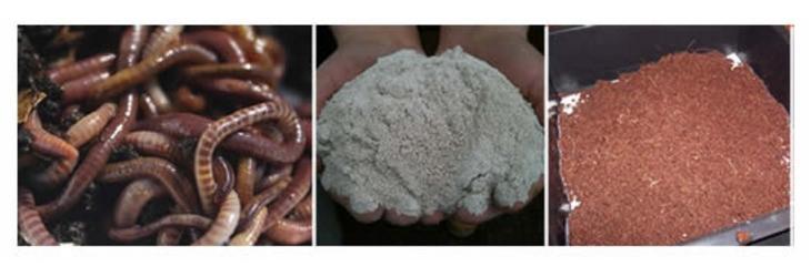 composteren met compostwormen