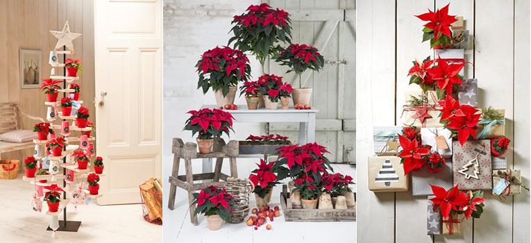 Alternatieven voor de kerstboom