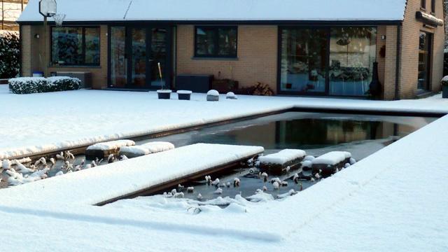 Vijveronderhoud met sneeuw in december en januari