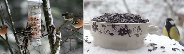 Winterse voederplaatsen voor vogels