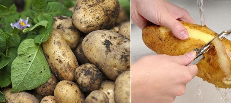 Verschillende soorten aardappelen