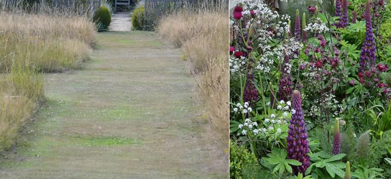 Planten die extra water nodig hebben: gras en lupines