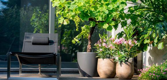 Laat je terrasplanten stralen !