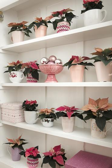 mini-planten