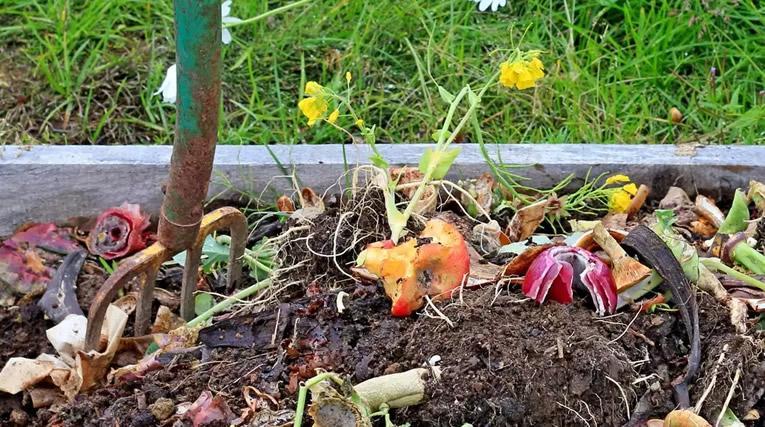Zelf compost maken: milieuvriendelijk, goedkoop én doeltreffend
