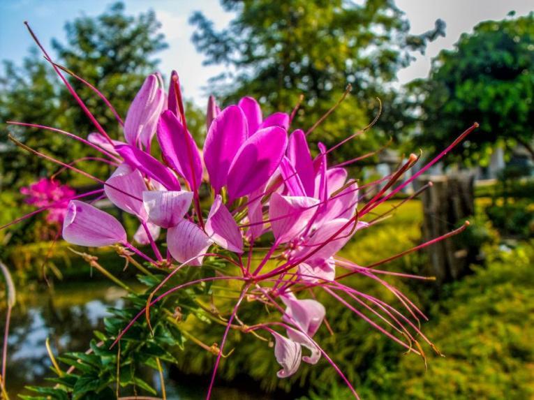 zomer bloembakken vullen