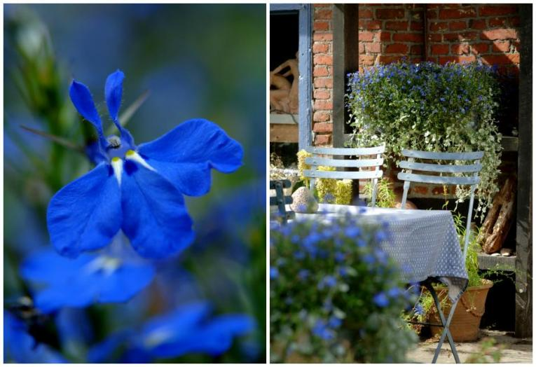 lobelia in bloembakken - zomerse bakken vullen