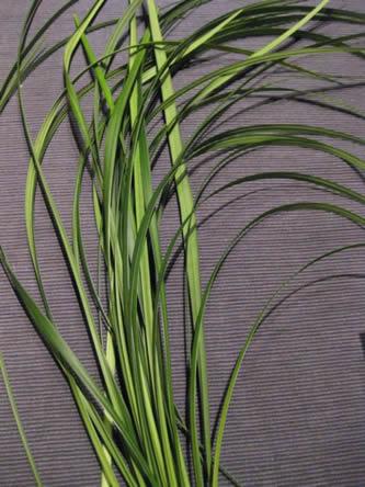 Bloemschikbenodigdheden : liliumgrassen