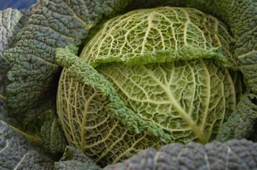 Groene kool of savooikool voor een frittata van aardappelen en groene kool