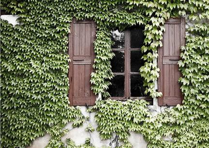 gevelbegroeiing . Muur laten begroeien met groenblijvende klimplanten