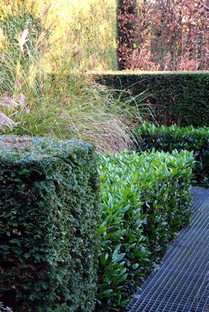 Taxus en laurierkersen groene sfeer in de tuin