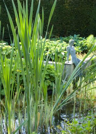 oeverplanten moerasplanten Typha latifolia - Lisdodde