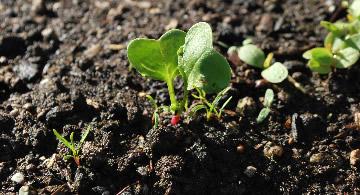 de groentetuin in maart
