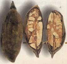 vruchten met zaden
