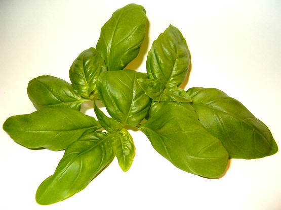 bladeren van de gewone basilicum