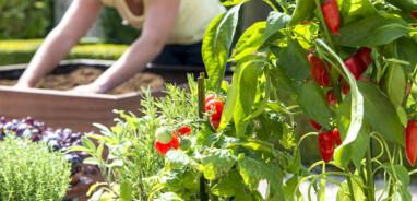 Bio-groenten zonder vraatschade