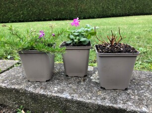 aanplanten in het najaar - vaste planten