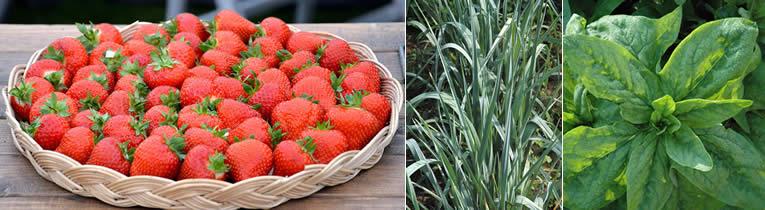 Juni: de eerste oogst van je vierkante meterbak