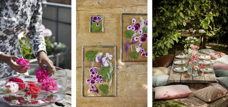 v.l.n.r. drijfbloemen, droogbloemen en tafelbloemen van geraniums