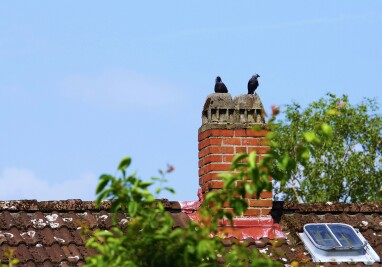 Koppel kauwen op een schoorsteen