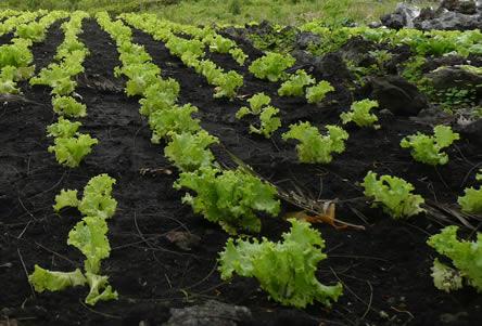 Zaaikalender voor de groententuin