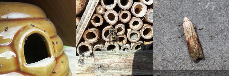 Mieren, wespen en nachtvlinders als parasieten van insectenhotels
